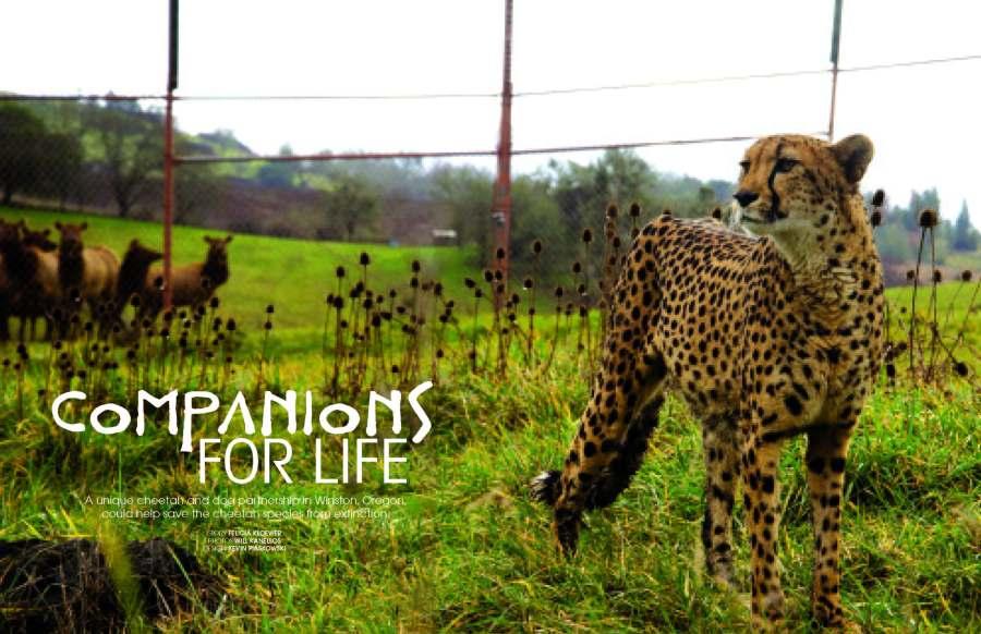 companionsforlife_page_1